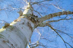 tree-2188495_640