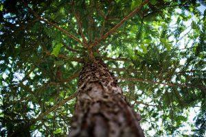 tree-1283721_640