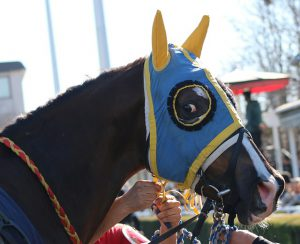 horse-2126956_640