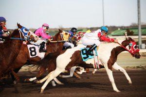 horses-2523301_640